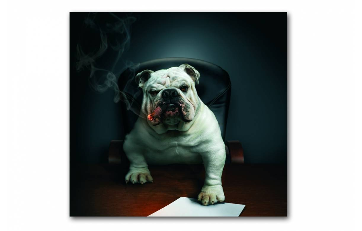 tableau animaux chien bulldog avec cigare 50x50 cm dogcy decome store. Black Bedroom Furniture Sets. Home Design Ideas
