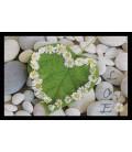 Tapis d'entrée antidérapant 40 x 60 cm Love Nature Galet -