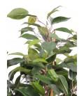 Plante artificielle Ficus tropical 60 cm -